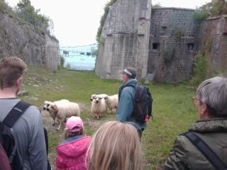 moutons bastille